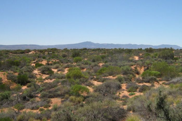 Clear blue skies in the Port Augusta area