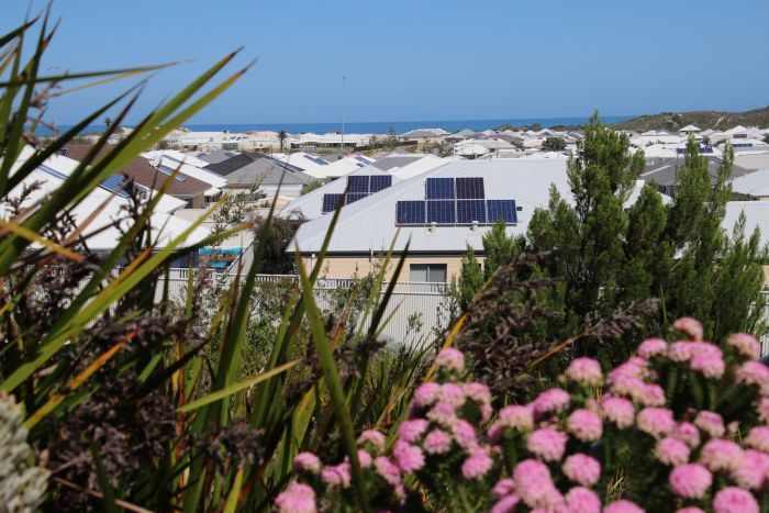Houses with solar panels on the roofs, with shrubs and flowers in the foreground.